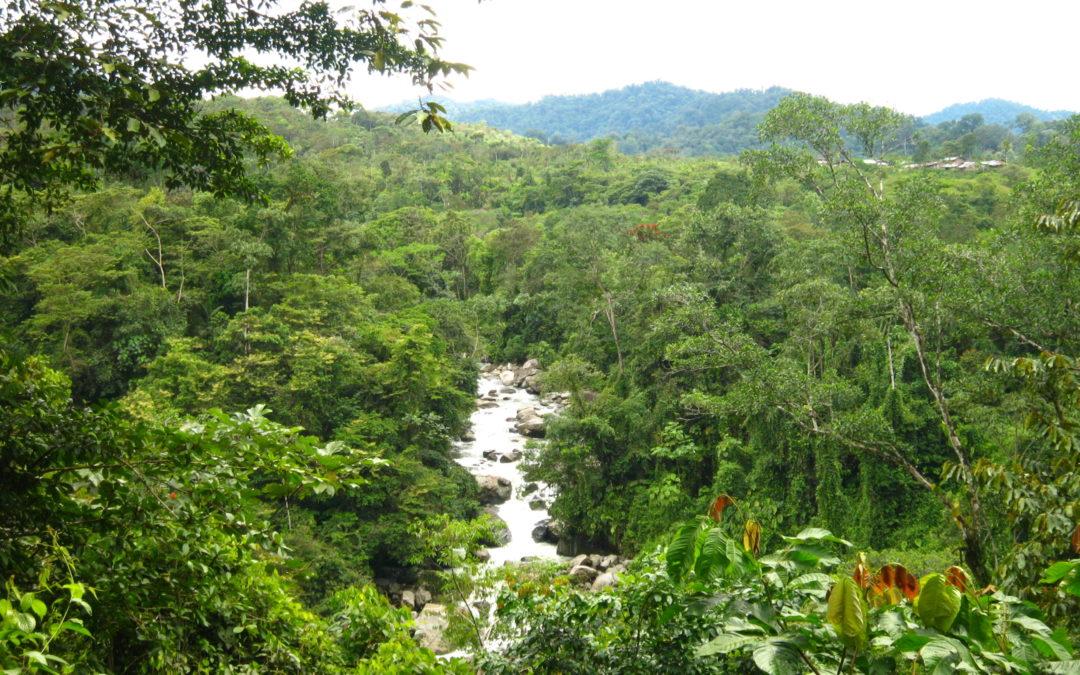 Consultoría sobre buenas y malas prácticas mineras en los bosques de Colombia