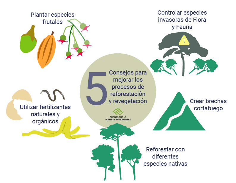 5 tips to improve reforestation and revegetation processes efficiency to face climate change
