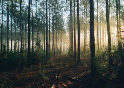 Desarrollar estándares de la minería inteligentes para los bosques